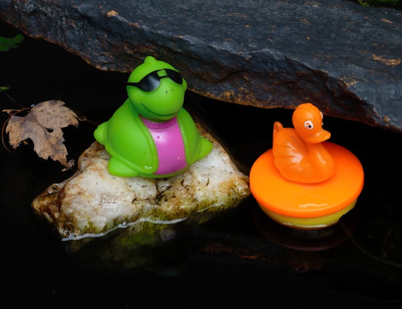 Duck & Turtle Regatta – EVTA Fundraiser at the Pumpkin Festival Sept 27